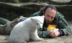 Стала известна причина гибели медведя Кнута