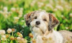Скончалась самая богатая собака в мире