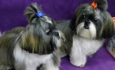 Собачья мода на все времена года