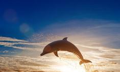 Наблюдение за играми дельфинов