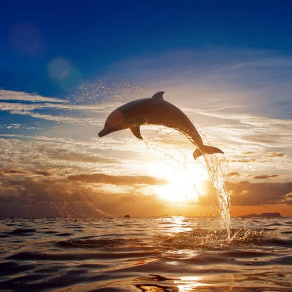 Игры дельфинов