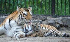 Мамы новосибирского зоопарка кормят детенышей грудью (фото)
