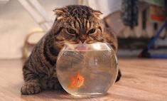 Умились и улыбнись: поклонникам кошек – сюда!