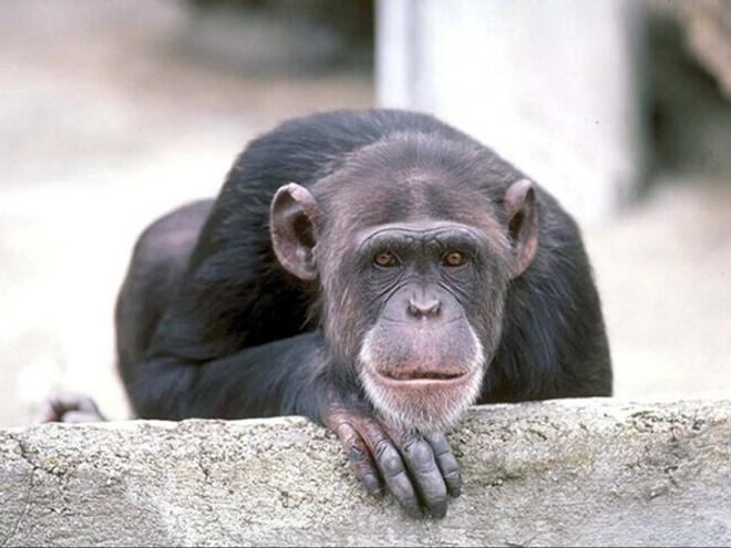 Парад обезьян