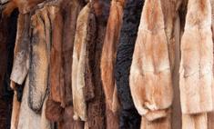 Шуба из сурка – отличный вариант для зимы. На что обратить внимание при выборе?