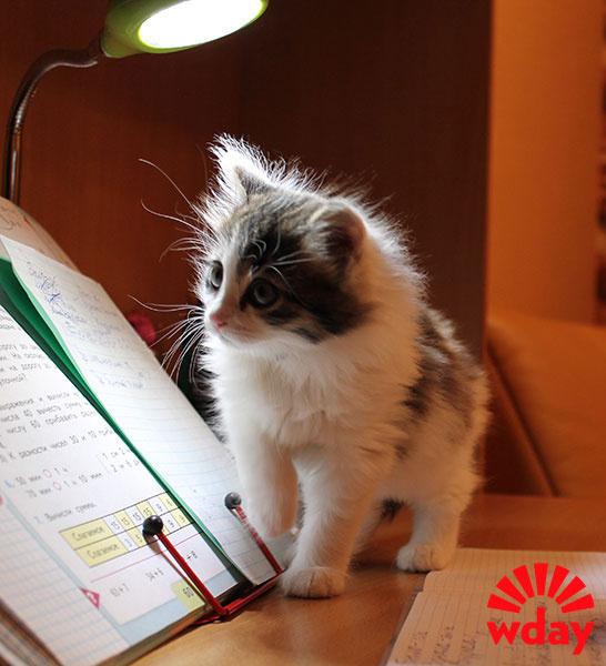 День кошек Саратов