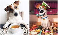 Тайная жизнь домашних животных: в кино и в реальности