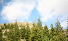 Greenpeace проводит акцию «Возродим наш лес»