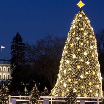 Одна из самых известных в мире елок, которая уже много лет стоит у Белого дома в Вашингтоне.