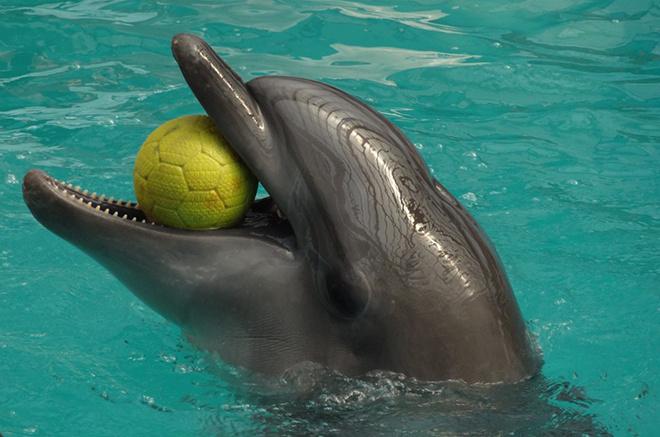 Ростовский дельфинарий, куда пойти в Ростове, афиша Ростова, куда пойти с ребенком, куда сходить в ростове, дельфинарий ростов на дону, ростов дельфинарий расписание
