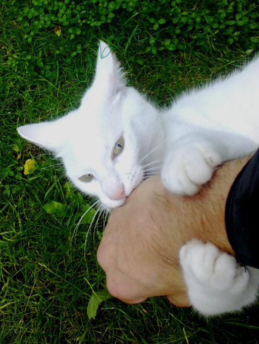 кошка кусается и царапается