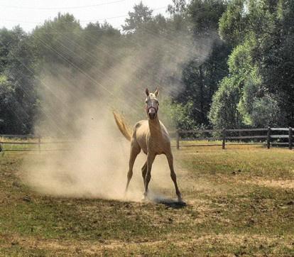 прогулки на лошадях Пенза