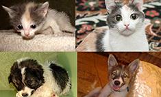 До и после: 7 трогательных историй бездомных животных, которых спасли самарцы