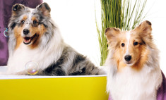 Сегодня праздник у собак! Где в Краснодаре сделать питомцу маникюр и укладку