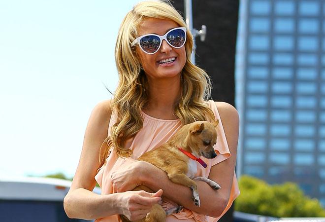 Пэрис Хилтон с собакой: фото