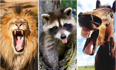 Какое животное ты напоминаешь, когда зла?