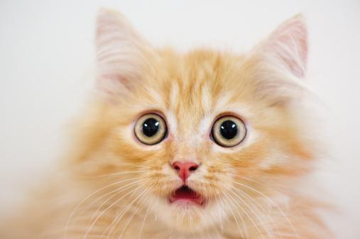 вазелиновое масло коту