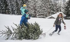 7 способов расстаться с елкой после Нового года