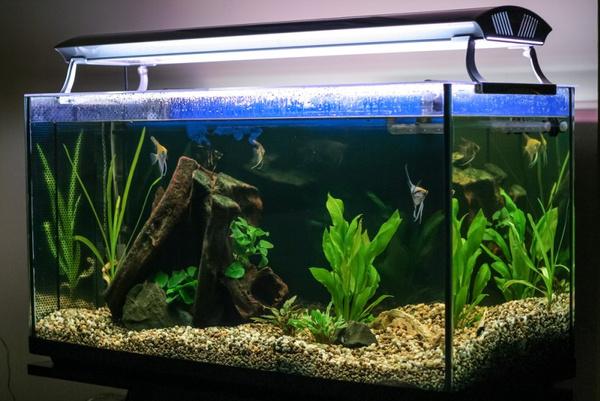 Причины мутной воды в аквариуме