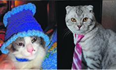 Модные кошки и собаки: голосуем за пушистых стиляг!
