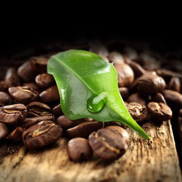 Кофейное дерево: выращивание и уход