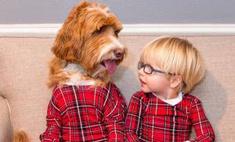 Безумно трогательно: дневник пса о малыше-хозяине