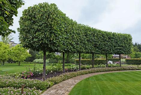 Садовые дорожки: практичные советы | галерея [4] фото [3]
