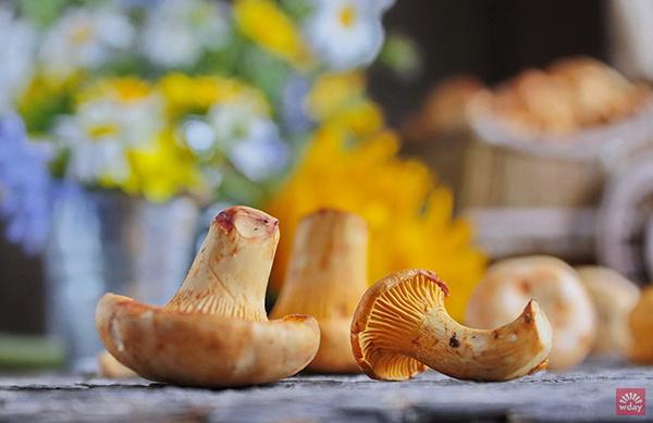грибные рецепты