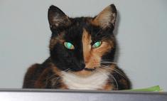 20 кошек с необычным природным окрасом