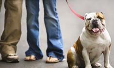 Собака становится средством устроить личную жизнь