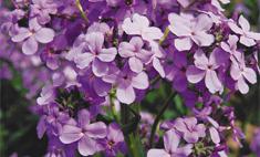 Топ-5: ночные цветы