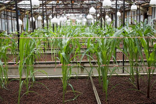 Аэрация растений