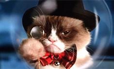 Мур-парад: котики, взорвавшие интернет