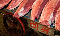 Самый дорогой тунец ушел с молотка за $400 тыс.