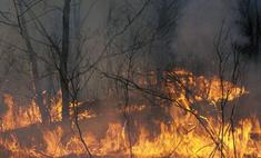 Лесной пожар уничтожил полдеревни под Владимиром