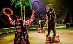 Шоу «Баронеты» в красноярском цирке: 28 фото, которые вам понравятся!