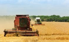 Засуха в России негативно сказалась на зерновых расценках