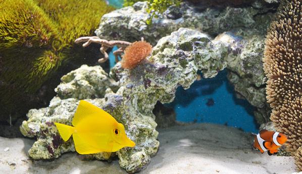рыбки тюмень аквариумы в тюмени аквагалерея тюмень