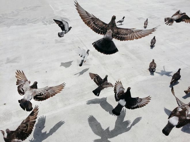 Волгоградцев вБлаговещение приглашают обозначить День птиц