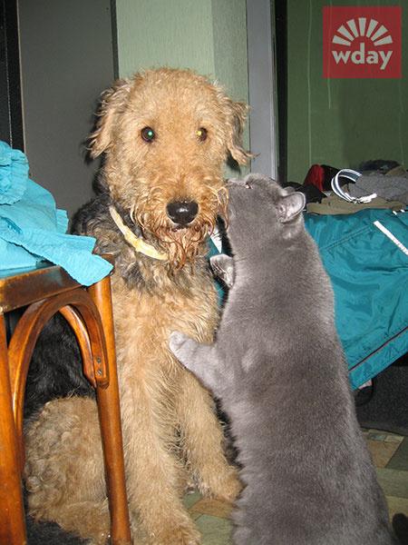 смешные коты фото