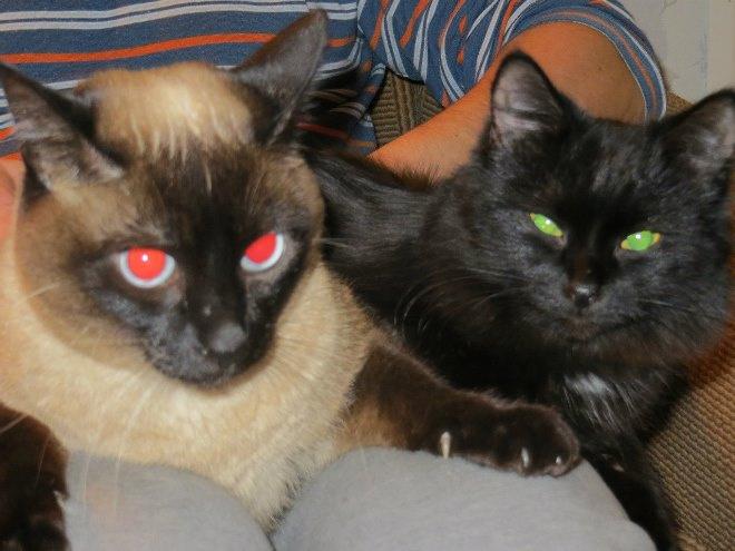 Кошки Марины Федункив