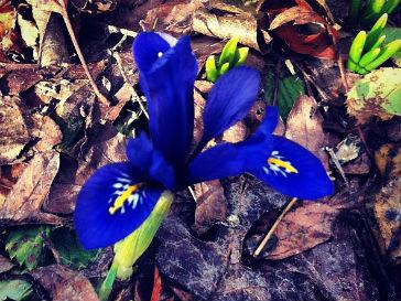 Ирена Понарошку любит электрический синий цвет