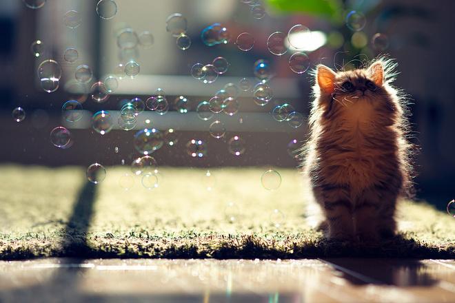 насморк у котенка