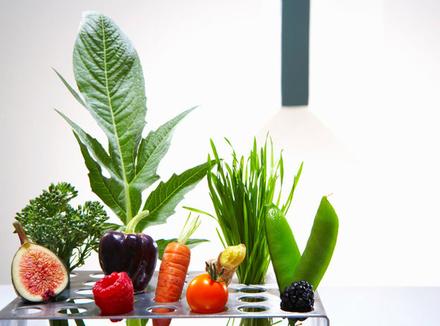 Что могут антиоксиданты