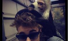 Джастин Бибер бросил свою обезьянку