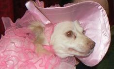 Парад собак в Воронеже: от принцессы до пирата