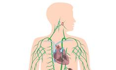 Увеличение лимфоузлов в подмышечных впадинах – симптом серьезного заболевания