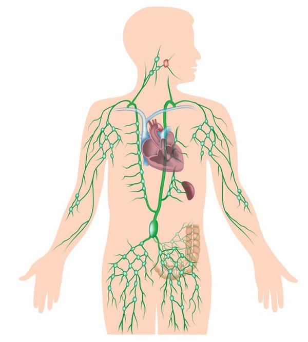 лимфоузлы под мышкой симптомы фото