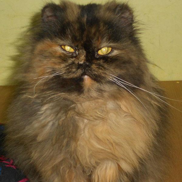 угрюмый кот из Кирова