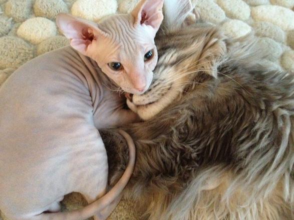 Топ милых котиков Оренбурга